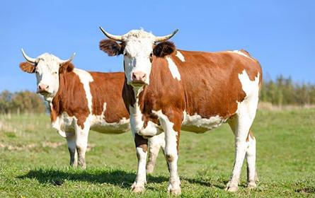 Milchbranche: Kostengerechte Erzeugerpreise für Nachhaltigkeit entscheidend