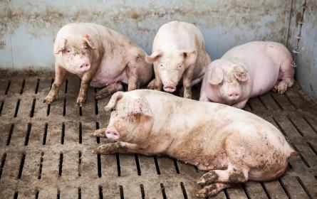 Vier Pfoten-Appell: Hände weg von Billig-Grillfleisch