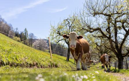 Berglandmilch erhöht erneut den Bauernmilchpreis