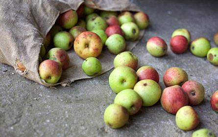 WWF-Report: 40 Prozent der weltweit produzierten Lebensmittel werden verschwendet