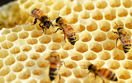 Aktion gegen falsche Lebensmittel: Gepanschter Honig in Wien entdeckt