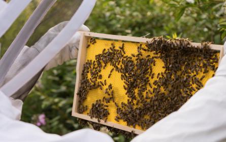 """Metro zum """"Tag der Honigbiene"""" am 21. August: Der heimischen Natur Gutes tun"""