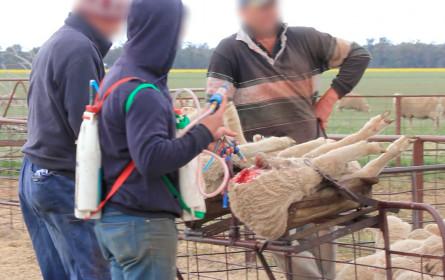 Pandemie führt zu starker Nachfrage nach tierfreundlicher Mode