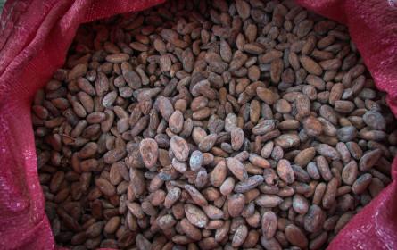 Weltmarkt für Kakao: Viel Licht, aber auch viel Schatten