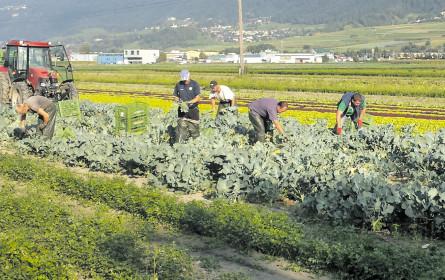 """Warum """"Erntehilfe"""" Landarbeit heißen sollte"""
