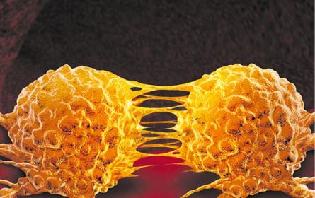 Simulation für Krebstherapie