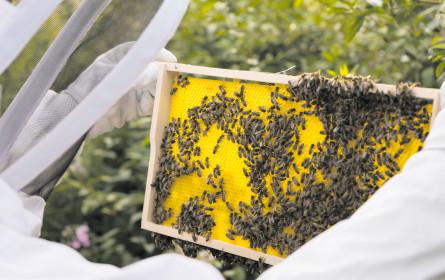Metro und die Honigbiene