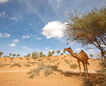 2014 Rekord-Tourismus in Ras Al Khaimah