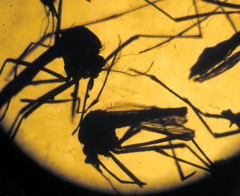 Mit dem aws gegen Zika