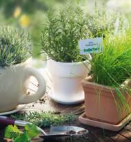 Legal Herbs bei bellaflora
