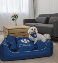 """Auszeichnung für """"Welcome Dogs!"""" bei Falkensteiner"""