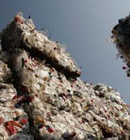 PET to PET im Burgenland recycelte im Vorjahr über 930 Mio. Flaschen