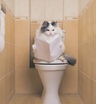 Weniger Relevanz, mehr Katzenvideos