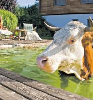 Wo Kühe im Pool baden & Gartenzwerge revoltieren