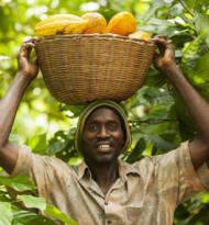 Fairtrade erhöht den Mindestpreis für Fairtrade-Kakao
