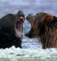 """US-Sender strahlt """"Universum""""-Zweiteiler """"Russlands wildes Meer"""" aus"""