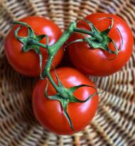 Selbstversorgungsgrad mit Tomaten in Österreich gering