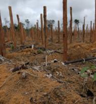 WWF warnt: Mercosur-Abkommen würde Klimakrise und Naturzerstörung weiter befeuern