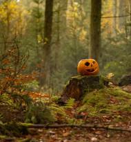 Halloween: Konsumenten geben im Schnitt 25 Euro aus; Topseller: Süßigkeiten, Kürbisse, Snack & Deko