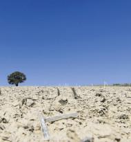 Klimawandel als Gesundheitsrisiko